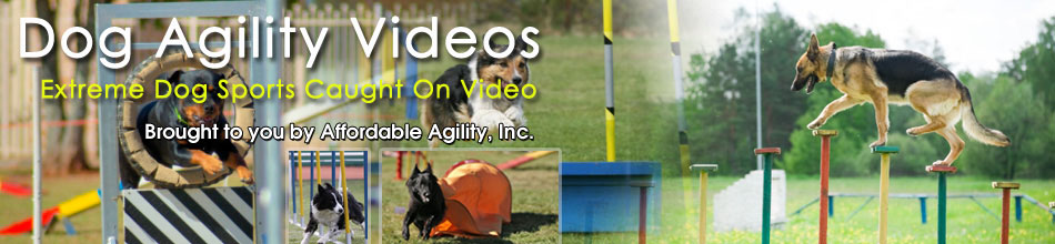 Dog Agility Videos