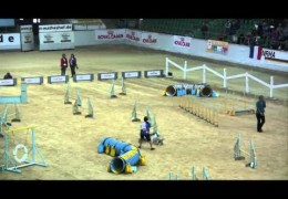 Dog Agility Bloopers From Agility WC 2010