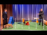 Conan Features Will Ferrel And His Agility Dogs