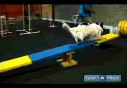 How To Start Your Dog On The Teeter or See-Saw