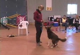 Develop Agility Dog Drive By Being A Bad Trainer