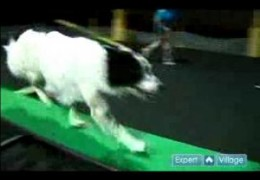 Excellent example of where all your dog agility training is going