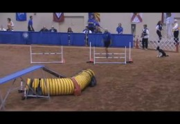 Watch these top dogs vying for the 2009 AKC National Agility Championship
