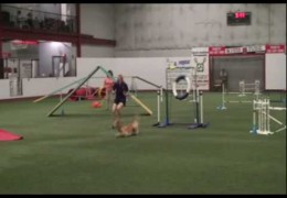 Why breakaway tire obstacles are a must in dog agility