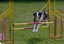 Amazing slow motion video of dog agility