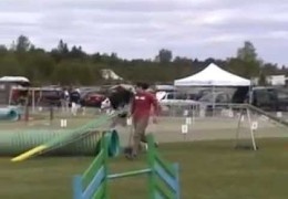 Agility Border Collies In Action