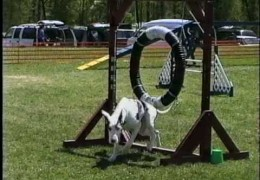 Funny Dog Agility Bloopers