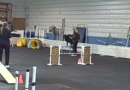 Rottweiler Kills an UKC Agility Course