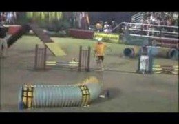 Watch This Little 13″ Terrier Clean Up the USDAA Steeplechase Course