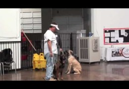 Using a Collar to Get Control of An Out of Control Dog