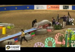 Jumper Horse and Agility Dog Relay