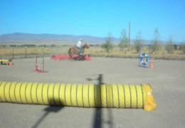 Dog Agility on Horseback
