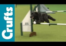 Rescued Dogs At The 2012 Crufts Dog Agility