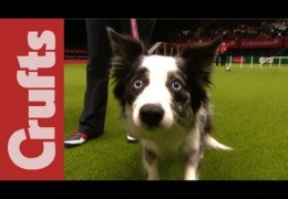 Bloopers from the 2012 Crufts Agility