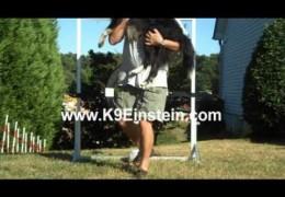 USDAA Safety Breakaway Dog Agility Tire