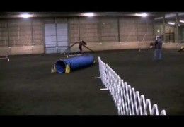 What it Takes for the NADAC Extreme Agility Team