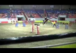 Neat Compulation of USDAA 2010 NAC Steeplechase Finals