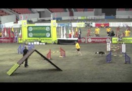 Young Border Collie Wins Her First USDAA National Steeplechase Championship