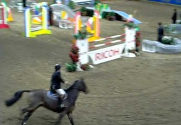 Jumper Horse and Agility Dog Relay 2