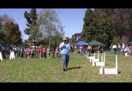 Flyball Relay Demonstration