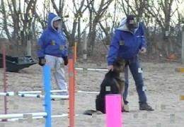 Teaching The Agility Dog to Work At Distance From The Handler
