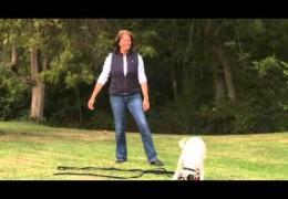 How to Teach Your Agility Dog the Recall
