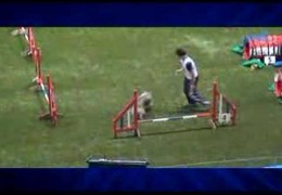 Bloopers from FCI Agility WC 2007