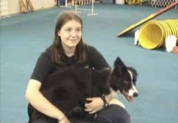 Want to Know More About Dog Agility
