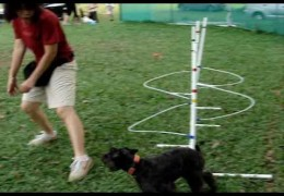 Teaching Weave Poles With Wired Weaves