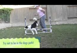 How to Teach Dog Agility Rear Crosses With One Jump