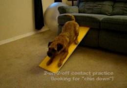 Apartment Dog Agility, No Excuses