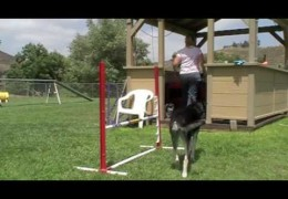 Teach Your Dog to Remain Calm In A Crate for Dog Agility Events pt 1