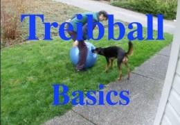 How To Teach A Dog To Push A Treibball