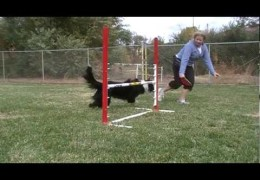 How To Start Your Agility Dog On The Jump Wrap