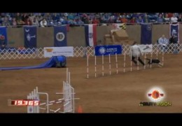 Crazy Fast Dogs At The 2010 AKC Nationals