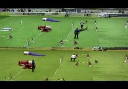 Frick vs Santolaya Side by Side Dog Agility Runs