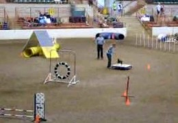 Watch This Miniature Pincher Eat Up This Dog Agility Course
