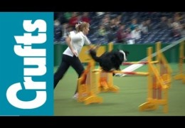 Agility Bloopers from 2012 Crufts Dog Show