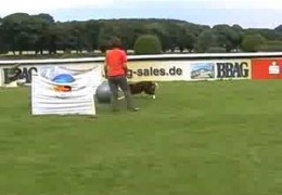 Treibball in Competition Setting