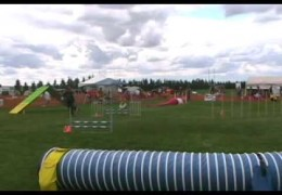 AAC Dog Agility Steeplechase Final Winners