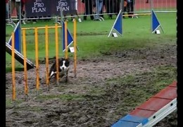 Would You Run Dog Agility In The Rain?