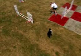 Purina Small Dog Agility Challenge Qualifier