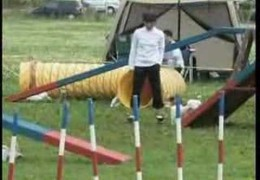 Check Out This Jack Russel Terrier on The Dog Agility Course