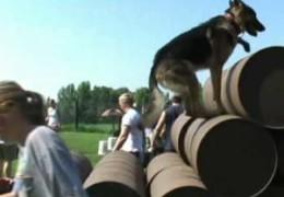 Amazing Video on Stress Dog Agility