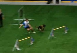 Ava the Belgian Tervueren's Last Dog Agility WC Competition