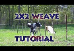How To Teach Weave Poles With the 2×2 Set Up