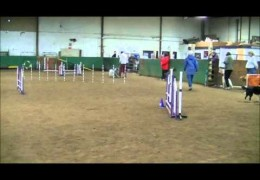 Never Seen Agility Dog Brace Teams? You Gotta See This