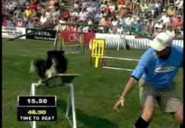 Papillon Grabs the 2009 Purina Incredible Dog Challenge National Small Dog Title