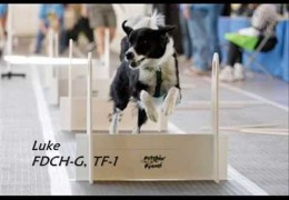 Dogs Gone Wild Love Their Flyball