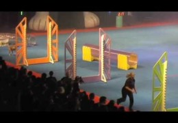The Super Dogs Show Has Super Agility Courses